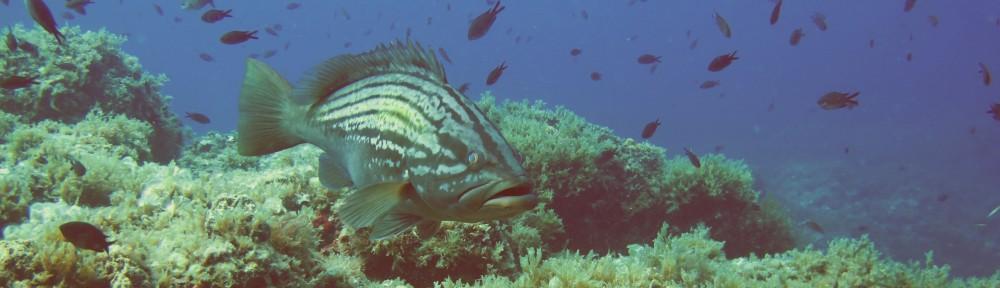 Ecología Marina y Conservación